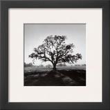Oak Tree, Sunrise Poster by Ansel Adams
