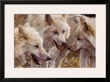 Tundra Summit Art by Carl Brenders
