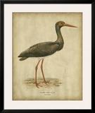 Vintage Heron I Prints by  Von Wright