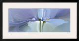 Iris XX Prints by Huntington Witherill