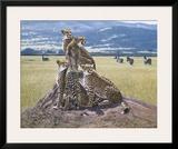 Cheetah Watch Framed Giclee Print by John Banovich