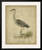 Vintage Heron II Posters by  Von Wright