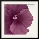 Violet Flower II Posters by Yvonne Poelstra-Holzhaus