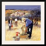 La cueillette des olives Prints by Andre Deymonaz