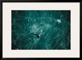 Baleine Prints by Yann Arthus-Bertrand