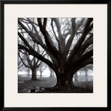 Oak Grove, Winter Print by William Guion