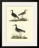 Selby Sandpipers II Poster by John Selby