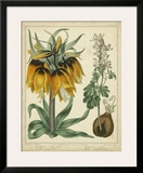 Golden Crown Imperial Print by Sydenham Teast Edwards