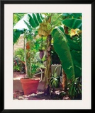 Banana Tree Posters by David Van Hulst