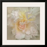 Paeonia Prints by Rebecca Swanson