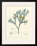 Luminous Seaweed II Poster by Henry Bradbury