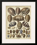Cowrie Shells I Posters by  Dezallier