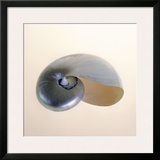Polished Nautilus Framed Giclee Print by Tom Artin
