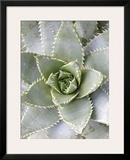Cactus III Framed Giclee Print by Jenny Kraft