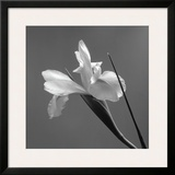 Iris IV Framed Giclee Print by Tom Artin