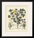 Besler Floral VI Prints by Besler Basilius