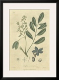 Woodland Foliage I Poster by  Weddell