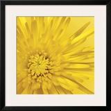 Yellow Mum III Framed Giclee Print by Jenny Kraft