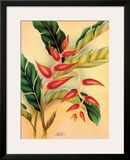 Heliconia, Hawaiian Tropical Flower c.1940s Framed Giclee Print by  Hale Pua Studio
