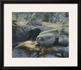 Boulder Bruin Prints by Stephen Lyman