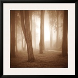 Woods Study II Print by Alan Klug