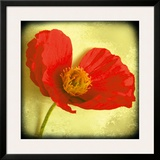Fresh Poppies I Framed Giclee Print by Rossana Novella