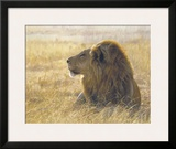 Danger on the Wind Framed Giclee Print by John Banovich