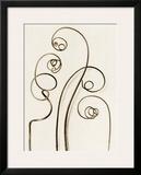 Bryonia Alba, White Bryony Prints by Karl Blossfeldt