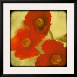 Fresh Poppies II Framed Giclee Print by Rossana Novella