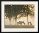 Horses in the Mist Prints by Monte Nagler