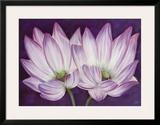 Lotus Love Print by Kaye Lake