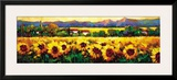 Sweeping Fields of Sunflowers Posters by Nancy O'toole