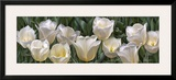 Eleven White Tulips Poster by Edward Loedding