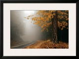 Yellow Leaves in Fog Framed Giclee Print by David Winston