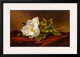 Magnolia Grandiflora Art by Martin Johnson Heade