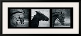 Horse Triptych Framed Giclee Print by Pete Kelly