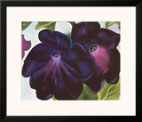 Black and Purple Petunia, 1925 Posters by Georgia O'Keeffe