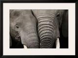 Calin d'Elephants Print by Michel & Christine Denis-Huot