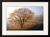 Clearing Framed Giclee Print by David Winston