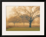 Memory of Trees Prints by M. Ellen Cocose