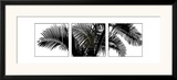 Palm Frond Triptych III Art by Bill Philip