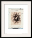 Bird's Nest Prints by Julie Nightingale