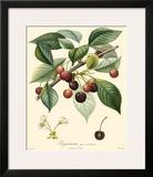 Cherries Posters by  Bessa