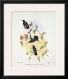 Dorifera Veraguensis Prints by Aaron Ashley