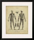 Anatomy Study II Prints by Jack Wilkes