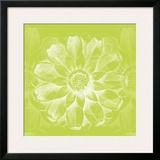 Chromatic Rosette II Prints