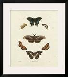 Butterflies III Art by George Wolfgang Knorr