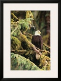 Silent Sentinel Alaska Framed Giclee Print by Art Wolfe