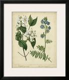 Cottage Florals I Posters by Sydenham Teast Edwards