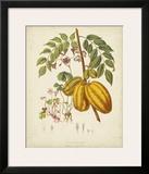 Twining Botanicals V Posters by Elizabeth Twining